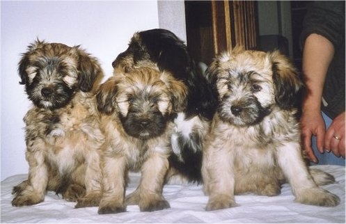 puppies.jpg (41010 bytes)